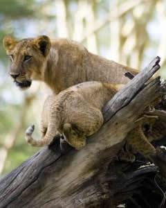 Wildlife @ Lake Nakuru National Park, Kenya