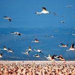 Birdwatching @ Lake Nakuru National Park, Kenya