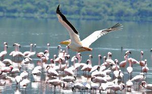 Lake Chad Basin National Park, Borno State