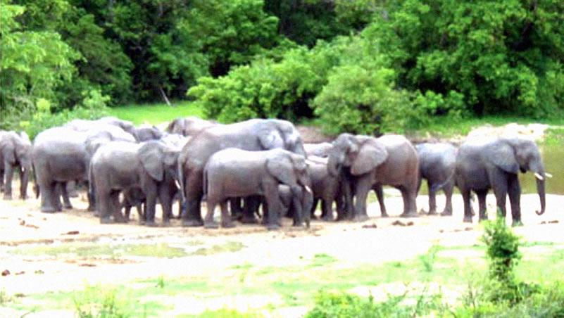 Elephants at Kamuku National Park, Kaduna