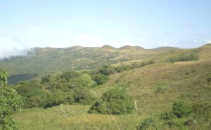 the Mambilla plateau